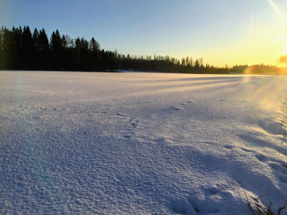 talvinen peltokuva